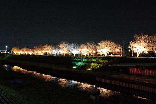 IMG_1983180406渋田川桜.JPG