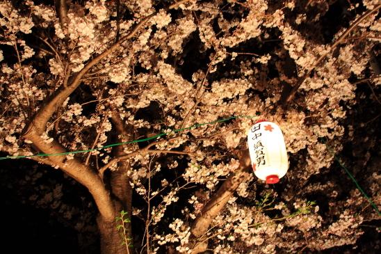 IMG_2012180406渋田川桜.JPG