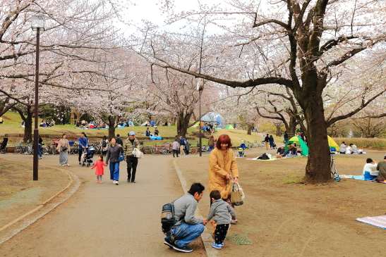 IMG_8335180331平塚総合公園の桜.JPG