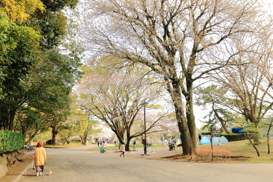 IMG_8341180331平塚総合公園の桜.JPG